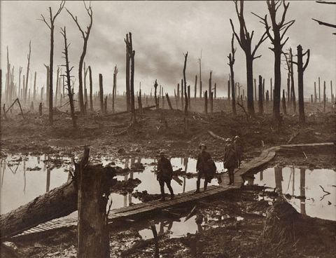 Polygon wood Belgium